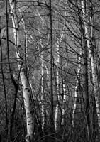 Black & White Natural Fine-Art Print