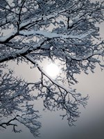 Winter 1 Fine-Art Print