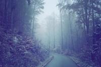 Blue Woods Misty Way Fine-Art Print