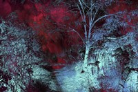 Moonlight Forest Fine-Art Print
