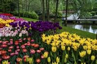 Colorful Corner Keukenhof Tulips Garden 1 Fine-Art Print