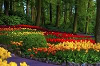 Colorful Corner Keukenhof Tulips Garden 3 Fine-Art Print