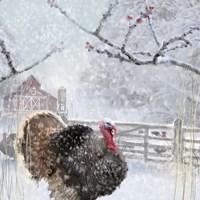 Christmas Turkey Fine-Art Print