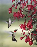 Fuchsia Friends Fine-Art Print