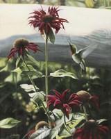 Lynn's Garden Fine-Art Print