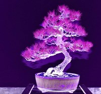 Purple Flame Bonsai Fine-Art Print