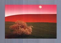 Palouse Hills, Usa Fine-Art Print