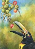 Aracari Toucanet Fine-Art Print