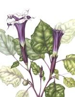 Mr Purple Fine-Art Print