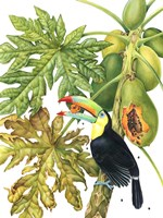 Toucan in Papaya Tree Fine-Art Print