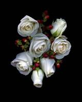 White Roses Red Berries Fine-Art Print