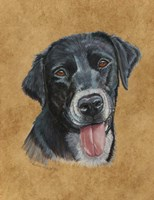 Bandit Black Lab Fine-Art Print