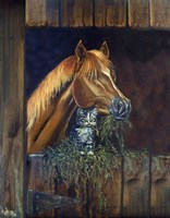 Barn Buddies Kitten And Horse Fine-Art Print