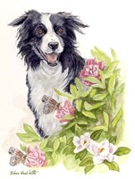 Border Collie With Flowers Butterflies Fine-Art Print