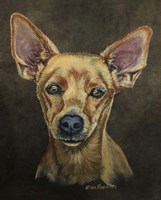 Cody The Chihuahua Fine-Art Print