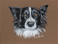 Gunner Border Collie Fine-Art Print