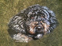Joesy The Fluffy Dog Fine-Art Print