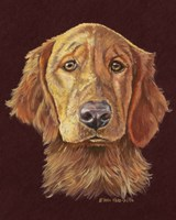 Linus Retriever Dog Fine-Art Print