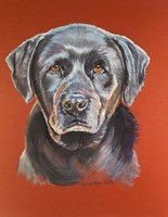 Maggie Black Lab Dog Fine-Art Print
