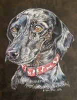 Pixie Dachshund Dog Fine-Art Print