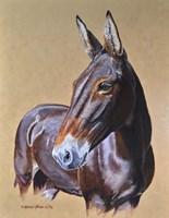 Clamity Jane Mule Fine-Art Print