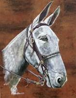 Molly Mule Fine-Art Print