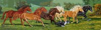 Running Horses With Border Collie Fine-Art Print