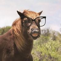 Say Cheese Horse Fine-Art Print