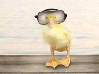 Diving Duck Fine-Art Print