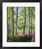 Enchanted Forest Fine-Art Print