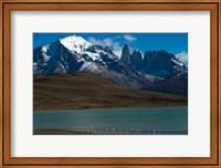Chilean Flamingo On Blue Lake, Torres Del Paine NP, Patagonia Fine-Art Print