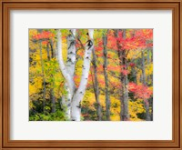 Hardwood Forest In Autumn Fine-Art Print