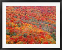 Superior National Forest In Autumn Fine-Art Print