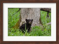 Black Bear Cub Next To A Tree Fine-Art Print