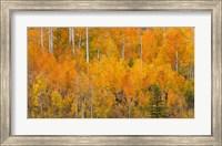 Autumn Forest Landscape Of The Manti-La Sal National Forest, Utah Fine-Art Print