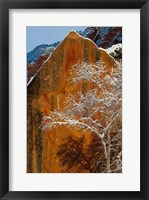 Snow Covered Tree In Front Of Red Rock Boulder, Utah Fine-Art Print