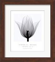 Triumph Tulip Fine-Art Print