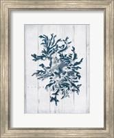 Coral White Wood Third Fine-Art Print