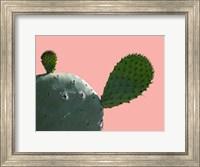 Cactus Slice 1 Fine-Art Print