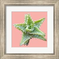 Plant Life Fine-Art Print