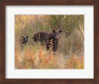 Black Bear Sow and Cub Fine-Art Print