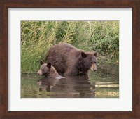 Black Bear Sow and Cub II Fine-Art Print
