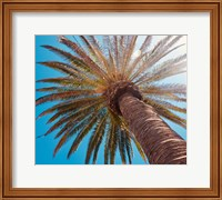 Sunny Palms Fine-Art Print