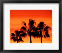Neon Palm Trees IV Fine-Art Print