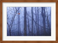 Red Cardinal in a Blue Forest Fine-Art Print
