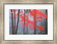 Splash of Red Fine-Art Print