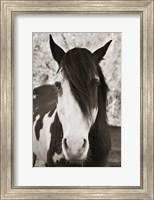 Pale Eyed Stallion Fine-Art Print