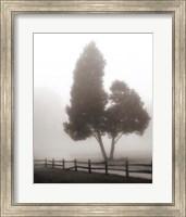 Cedar Tree and Fence Fine-Art Print