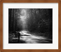 Tremont Road, Smoky Mountains Fine-Art Print