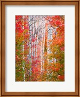 Autumn Passage Fine-Art Print